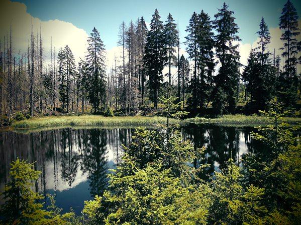 Böhmerwald, Wanderung zum Poledník
