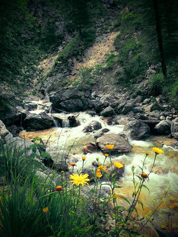 Der Abstieg von der Hochlandhütte entlang des Gebirgsflusses
