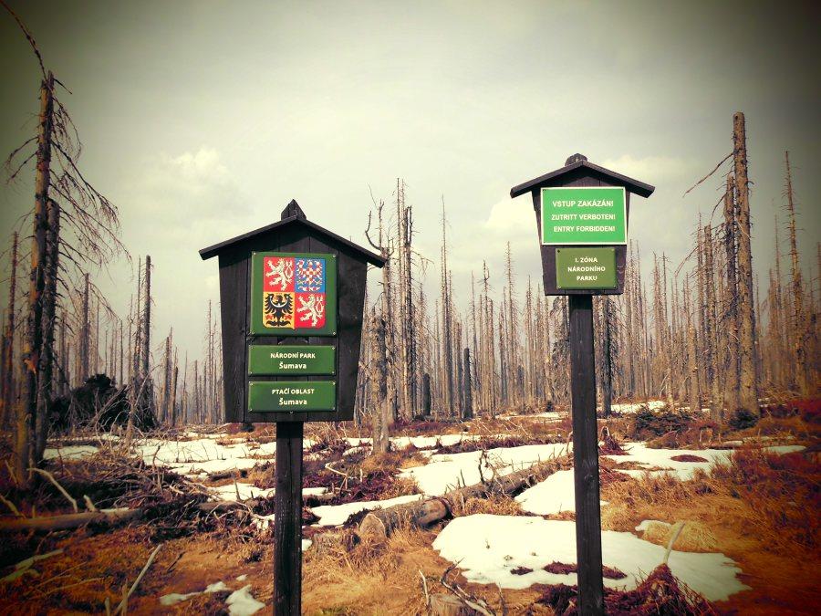 Borkenkäfer hinterlässt seine Spuren im Bayerischen Wald