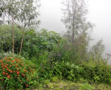 Grüne Landschaft auf Java, Vulkan Bromo, Indonesien