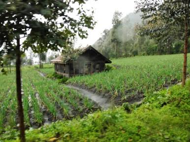 Reisfelder und Hütte auf dem Vulkan Bromo, Indonesien