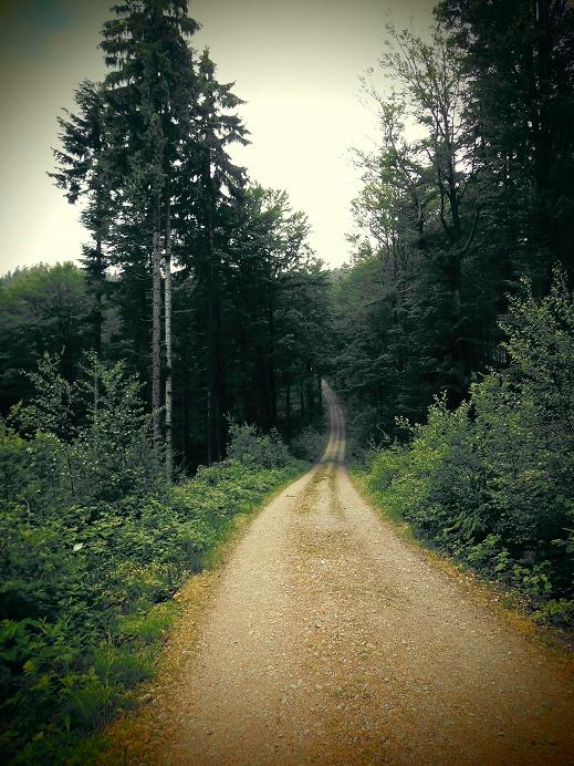 Forsttraße Bayerischer Wald