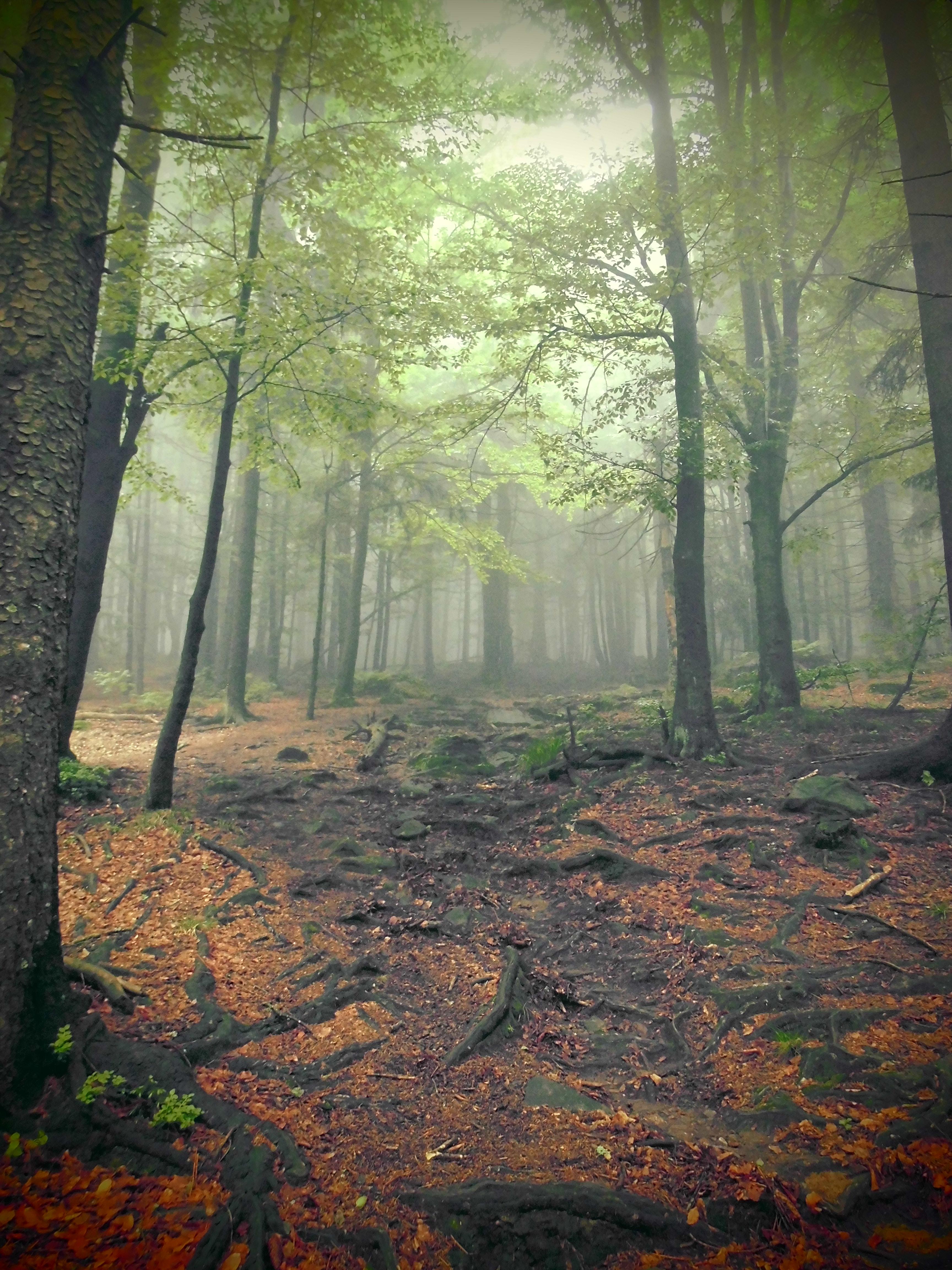 Leuchtender Bayerischer Wald