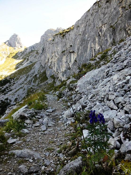 Gabelschrofen, Ammergauer Alpen