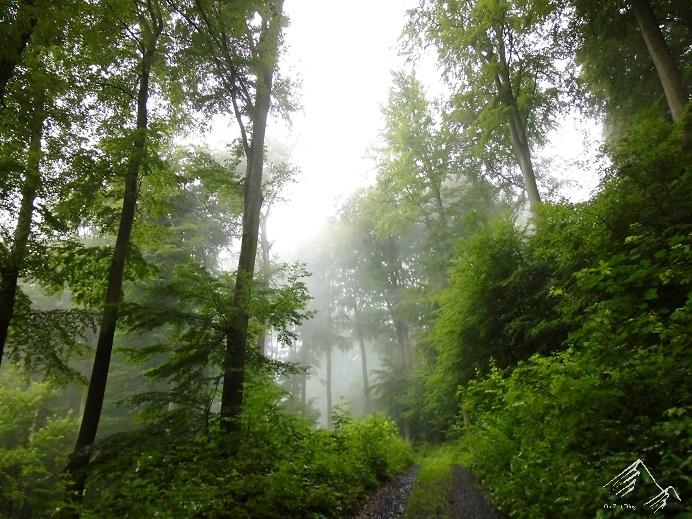 Nebel im Westerwald
