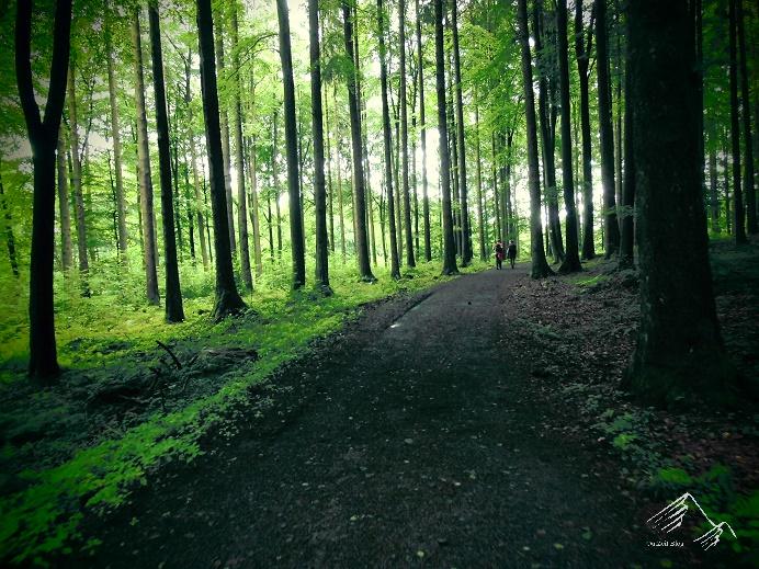 Wandermarathon auf dem Westerwaldsteig