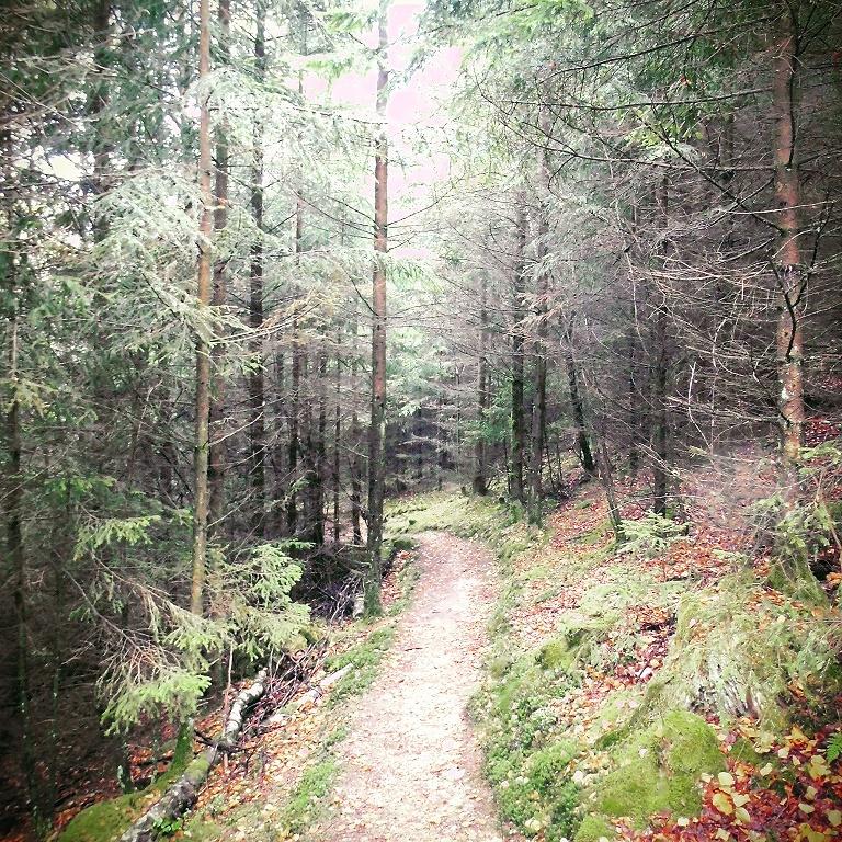Wandern in NRW: Wald in Siegen-Wittgenstein