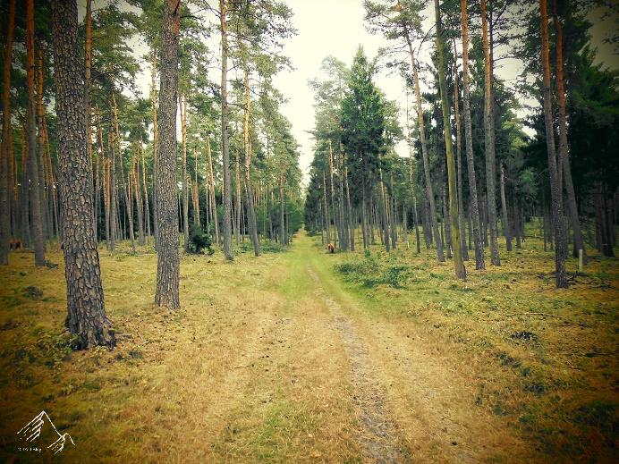 Sandboden im Teutoburger Wald