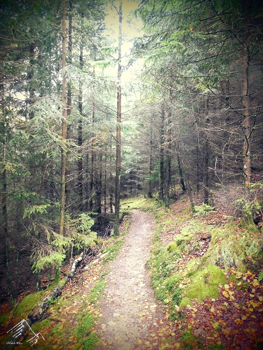 Waldgebiet Siegerland-Wittgenstein