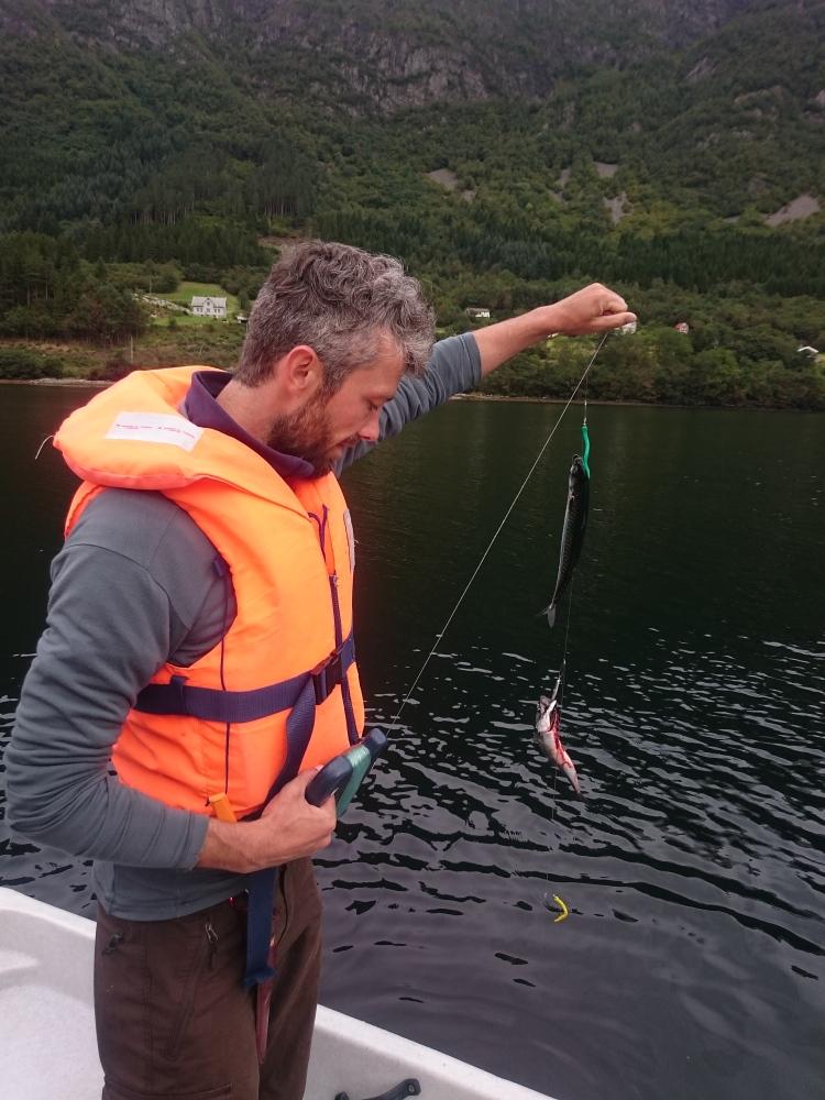 2 Makrelen an der Handangel