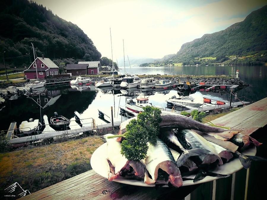 Frische Makrelen aus dem Stongfjord