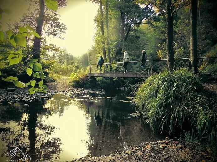 Über Brücken und Stege im Hohen Venn, Belgien
