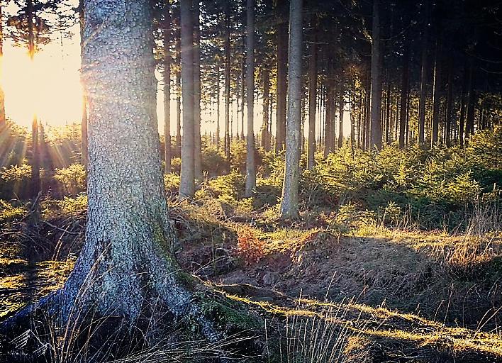 Traumhaftes Waldgebiet im Hohen Venn, Belgien.