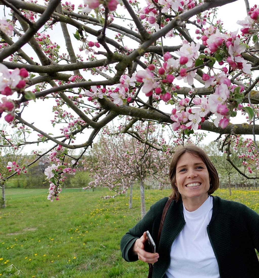 Obstbäume in Gau Odersheim, Rheinhessen