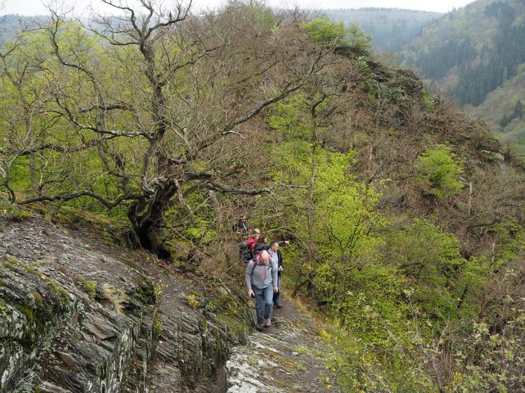 Felsig und Steil - Etappe 5 Ahrsteig