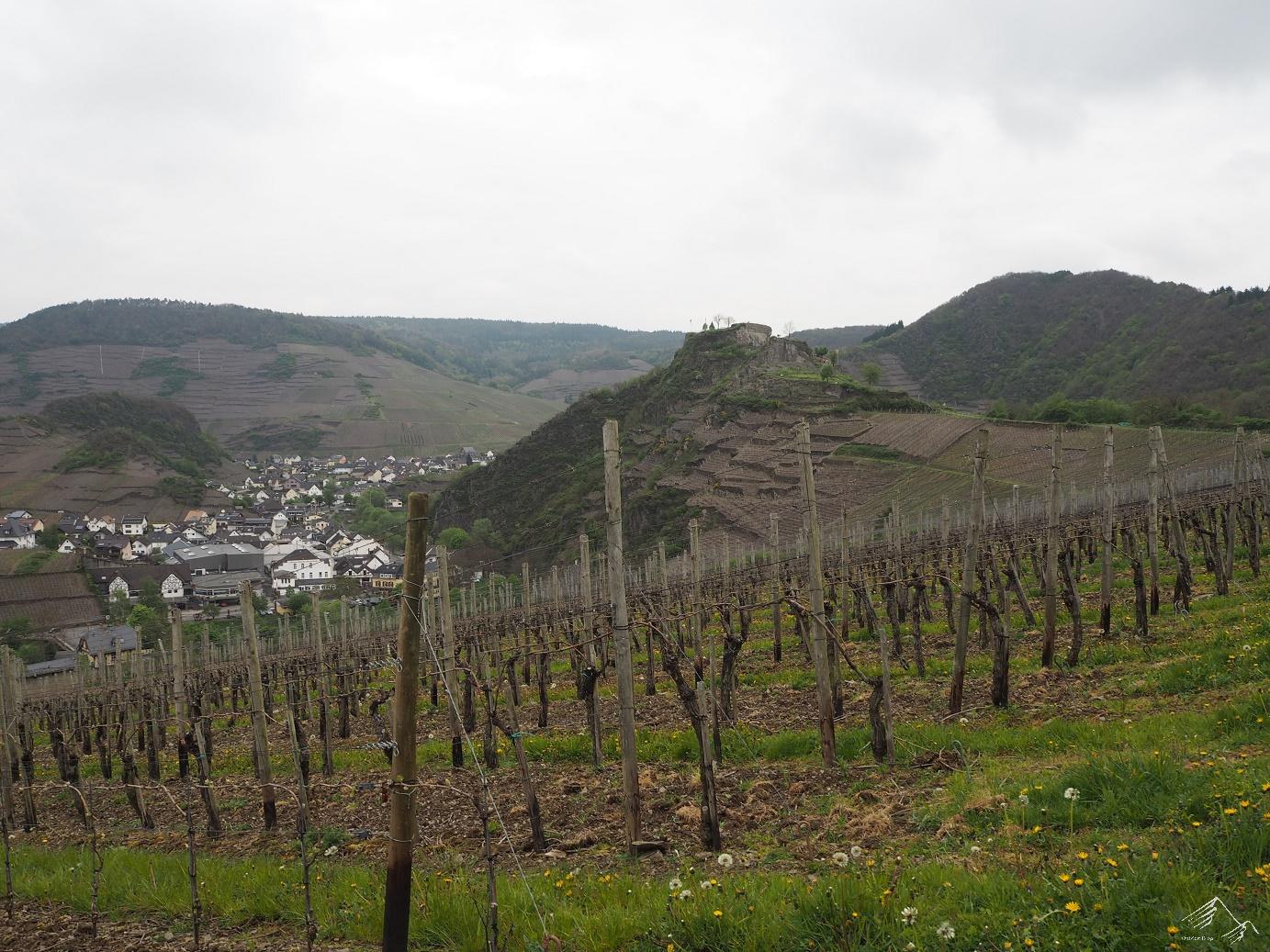 Blick auf die Burgruine Saffenburg
