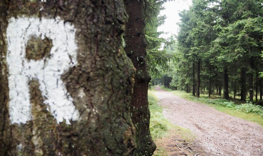 Das Wandersymbol des Rennsteigs, Thüringen