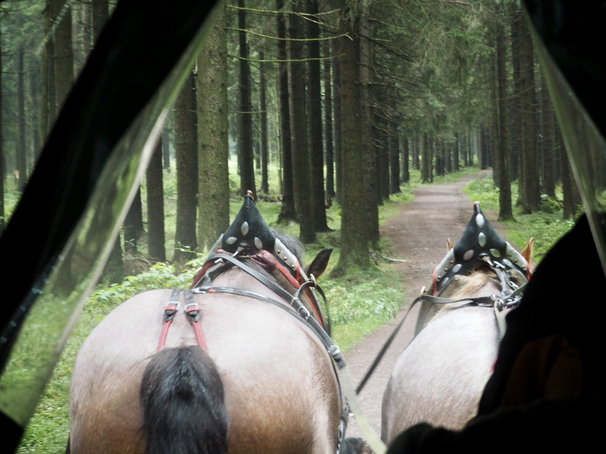 Kutschfahrt in Oberhof auf dem Rennsteig.