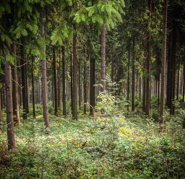 versteckte Hochmoore am Rennsteig in Thüringen