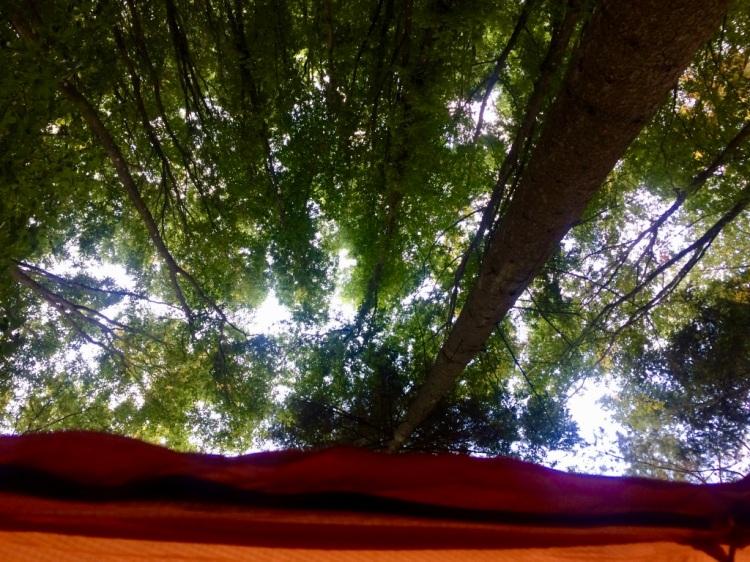 Ausblick aus dem Zelt - Trekking Pfalz