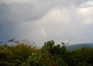 Regenbogen in der Pfalz