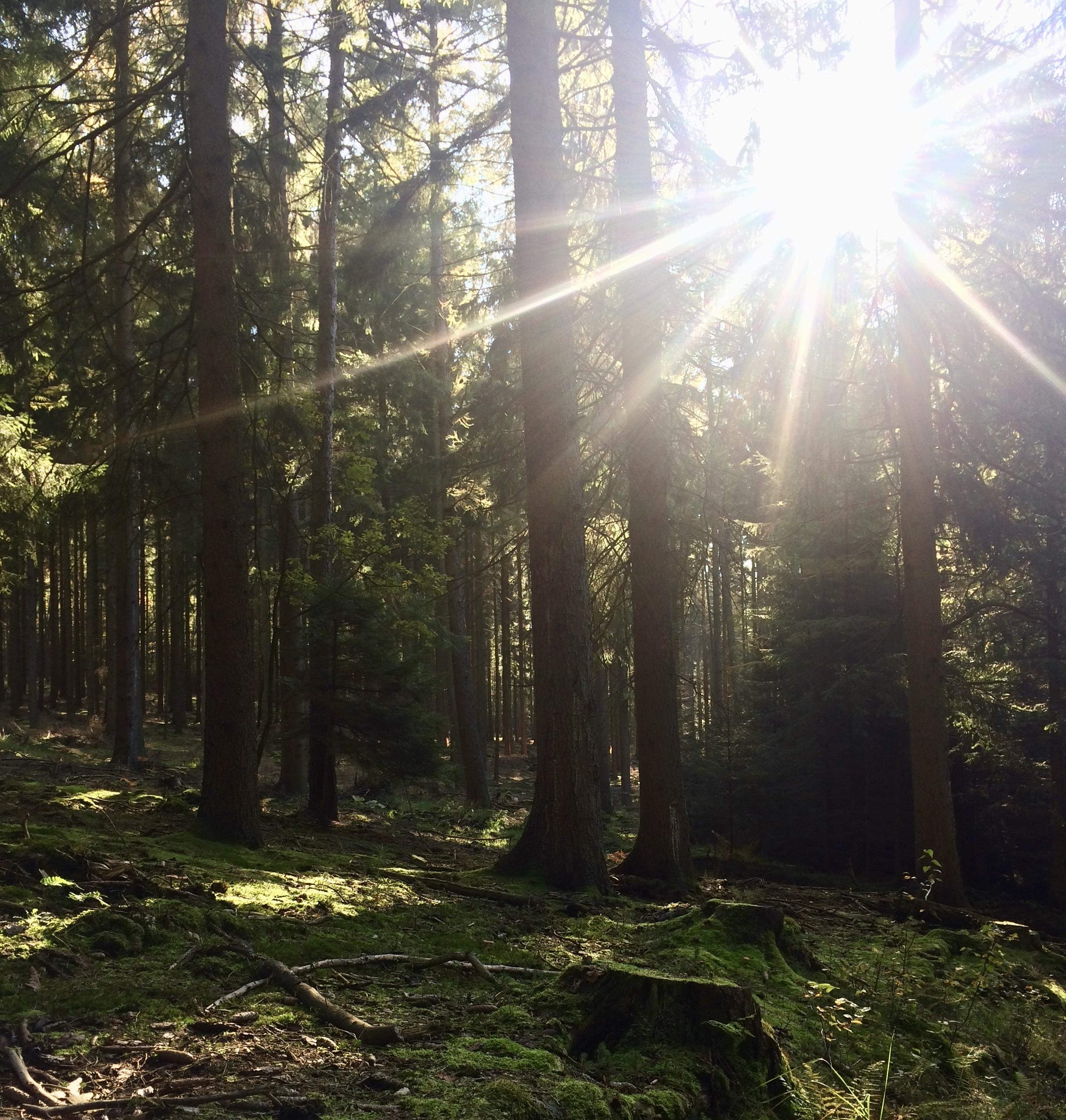Traumwetter auf der Sauerland Waldroute