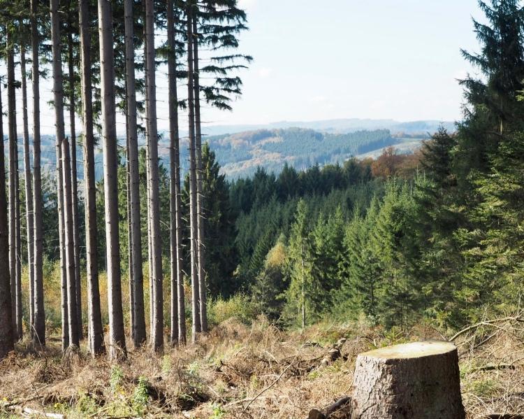 Kleiner Abstecher auf der Sauerland Waldroute