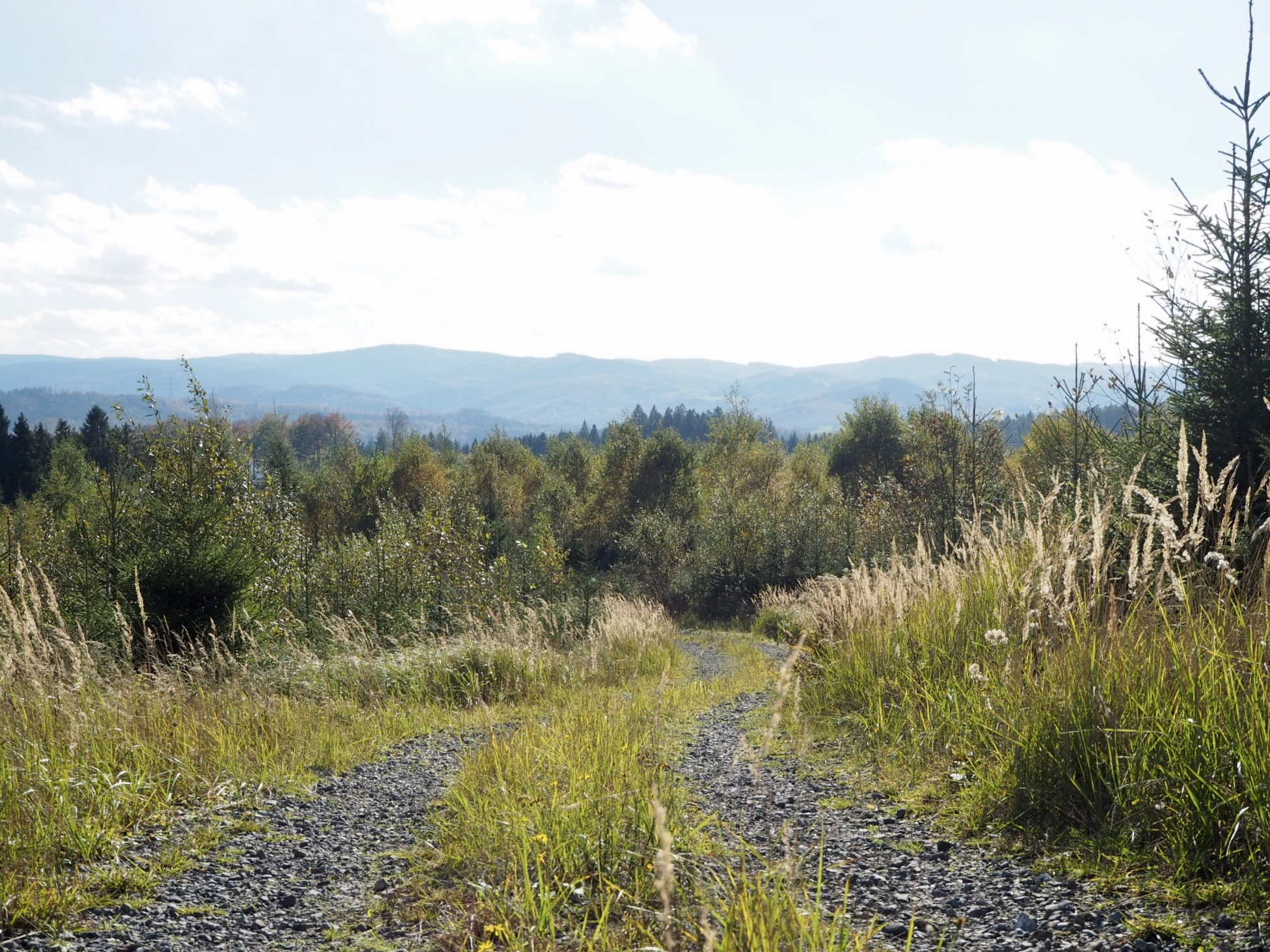 Sauerland Waldroute: Aussichten nach dem Orkan Kyrill