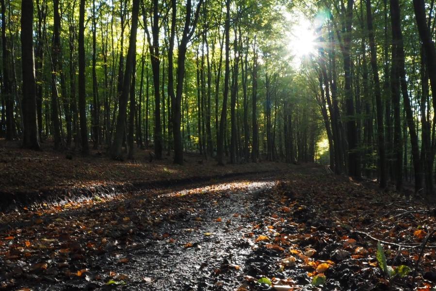 Die Sonne kämpft sich durch die Bäume auf der Sauerland Waldroute
