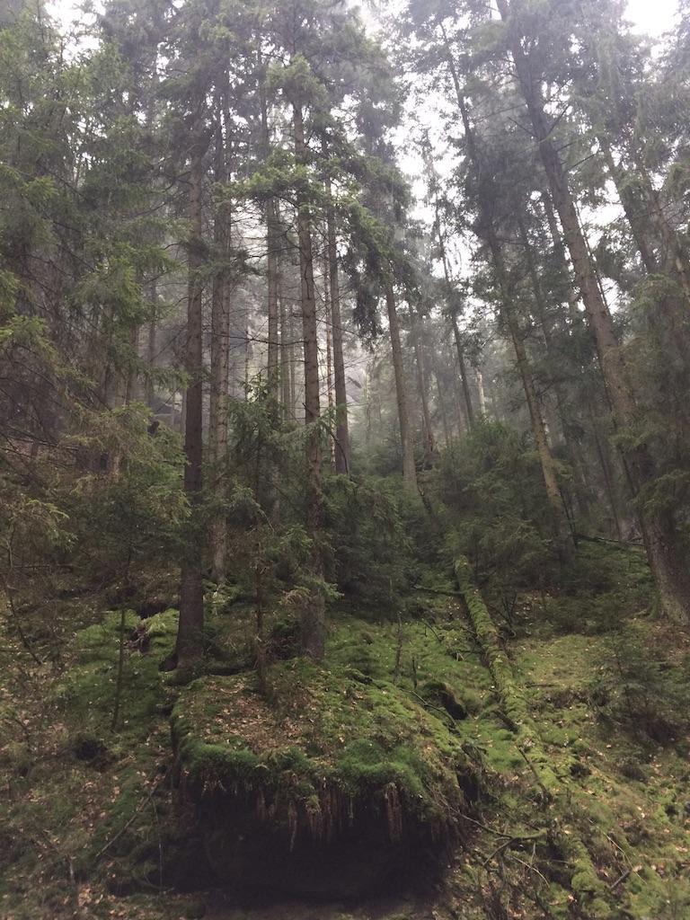 Etappe 3 Malerweg Sächsische Schweiz