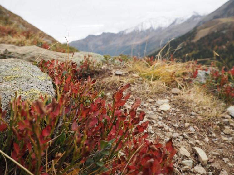 Hasenkofel Wanderroute Südtirol