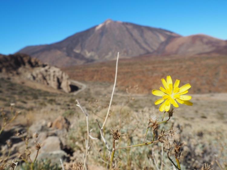 Wanderung auf den Guajara mit Blick zum Teide